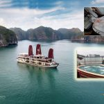 du-thuyen-orchid-trendy-cruises-smiletravel-view